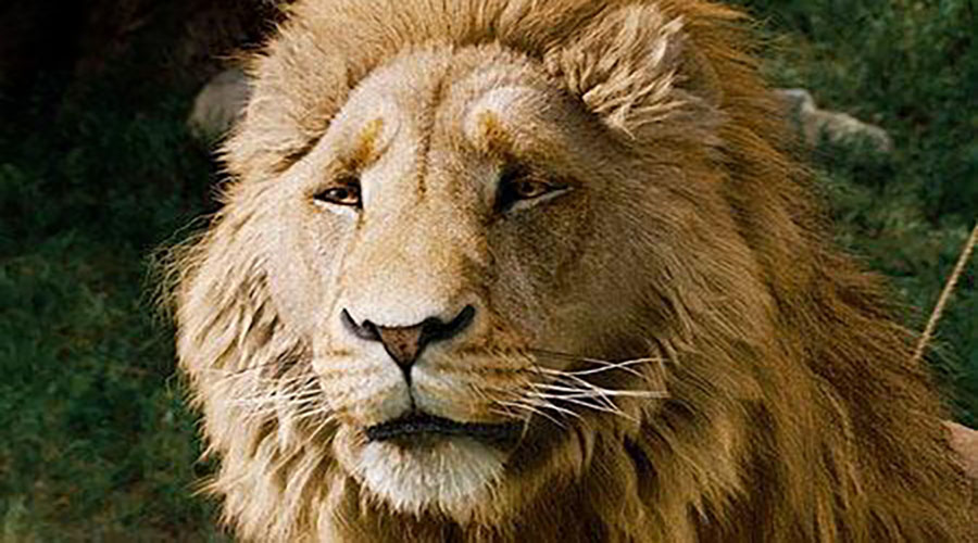 this is the great Lion Aslan that they were all talking about. She's caught him already and tur